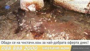 Премахване на червей почистване извозване дезинфекция